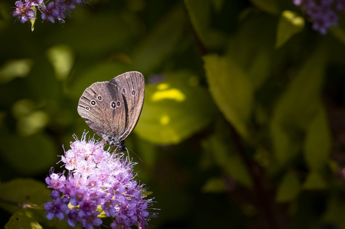ecologische tuin Mannen van Staal