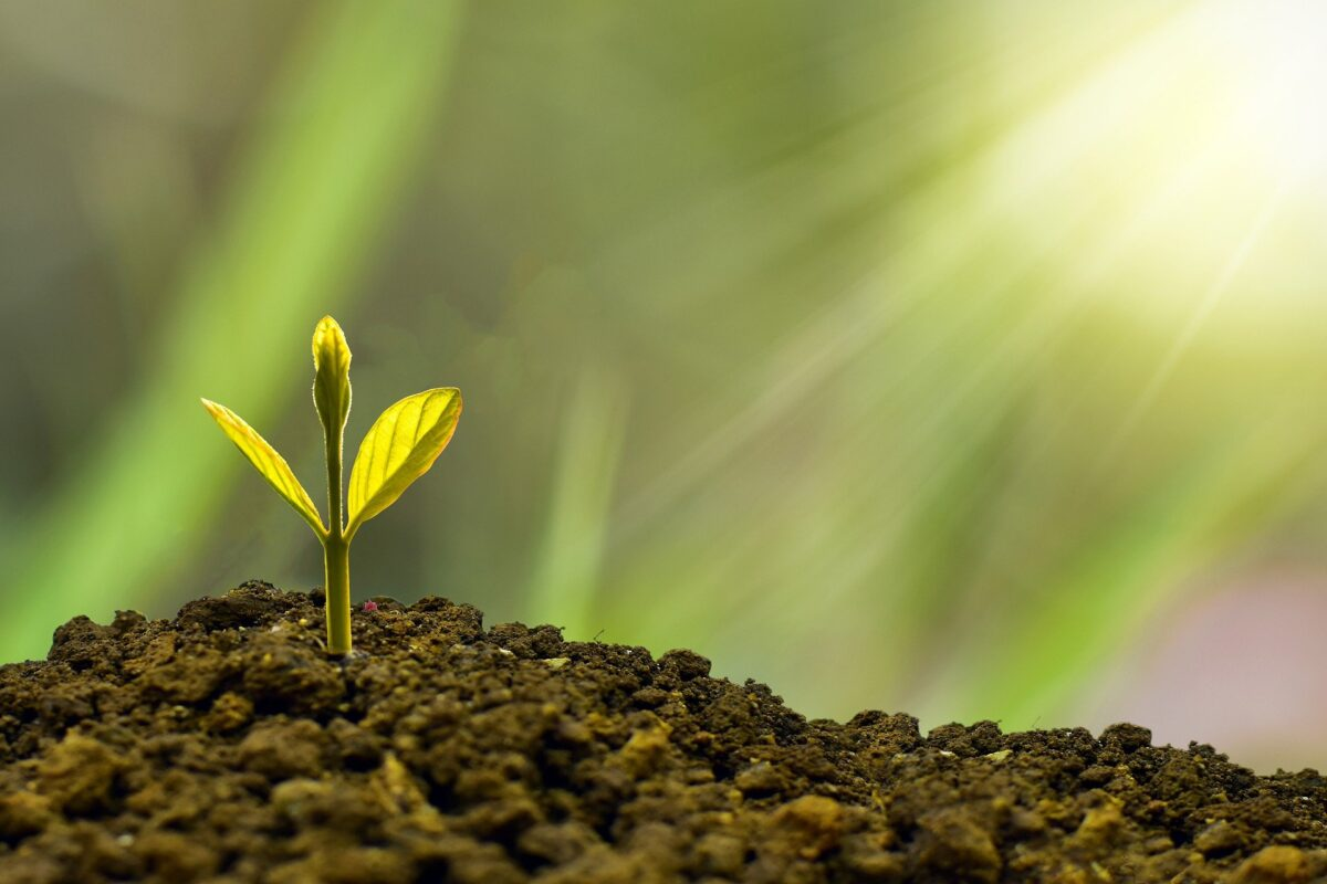 Webinar: Bioeconomy strategy accelerator toolkit