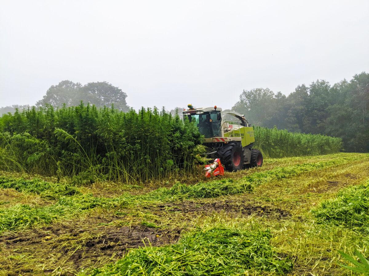 GreenInclusive: 350 hectare vezelhennep voor isolatiemateriaal in Noord-Nederland